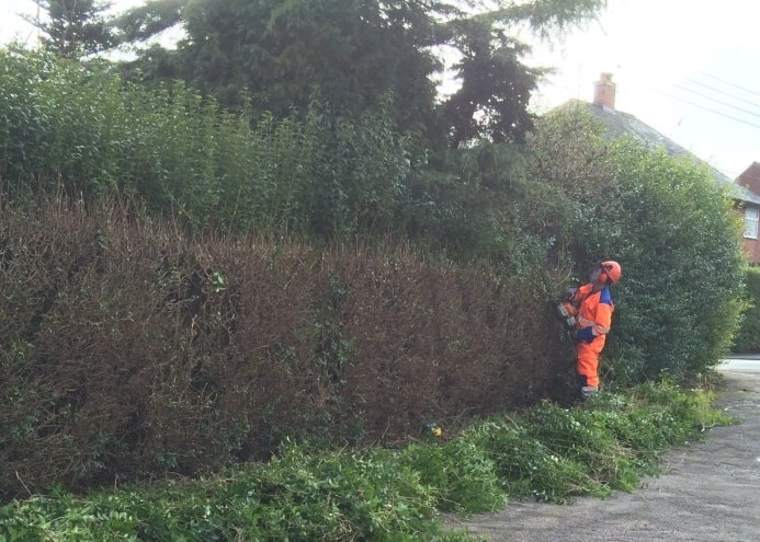 hedge trimming Warrington